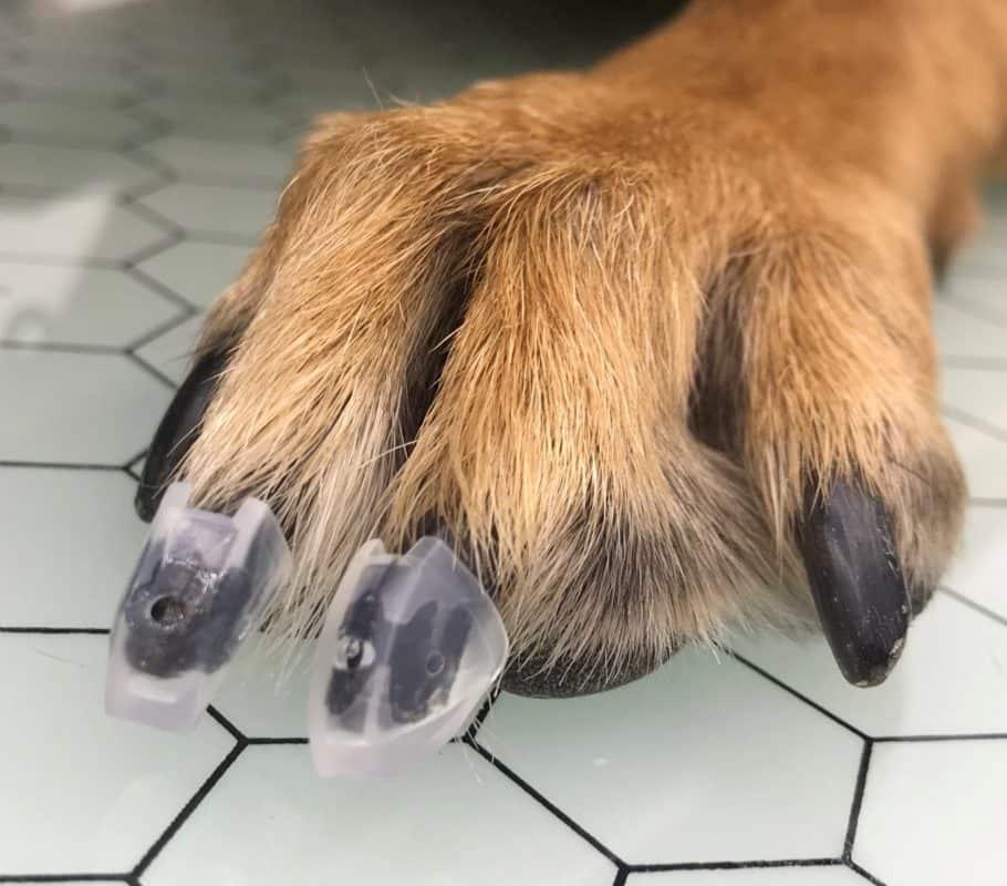 dog toe grips on paw