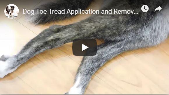 Dog Toe Tread Video