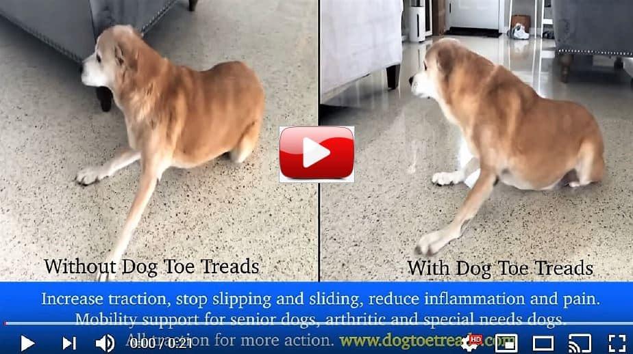 Dog Toe Grips Dog Toe Treads